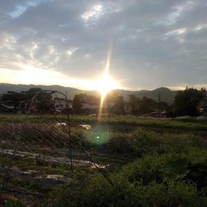 【農作業6月16日】早朝から苗400本以上定植して腰が痛かった日