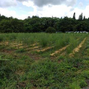 【農作業6月24日】雨の日は消毒したら勉強会です