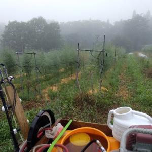 【農作業7月19日】ひんやり朝靄な白馬の朝です