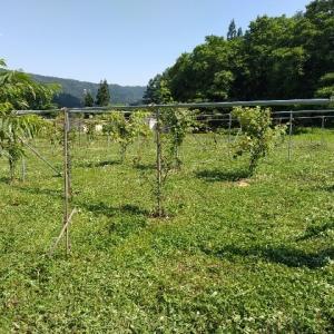 【農作業7月20日】白馬のフルーペーパーのラプラースに農園が紹介されましたよ
