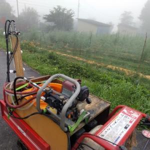 【農作業7月26日】4連休明けで日常の農業へ戻りました