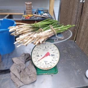 【農作業7月27日】秤に二年に一回の検定があるって知ってた?