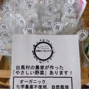 【農作業8月3日】夏野菜で食卓が豊富になってきました