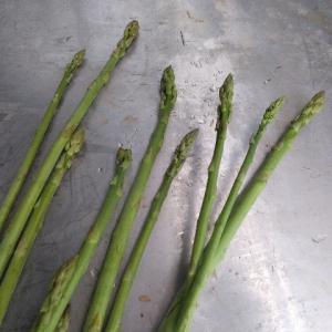 【農作業9月23日】アスパラ収穫終了で次なる稼ぎ柱は、、、野菜セット??