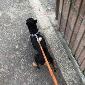 ささっと散歩