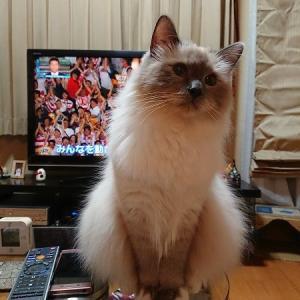 猫にも伝わる本気の応援。