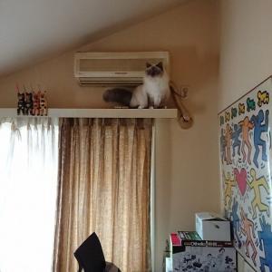 自宅警備員、夏男。