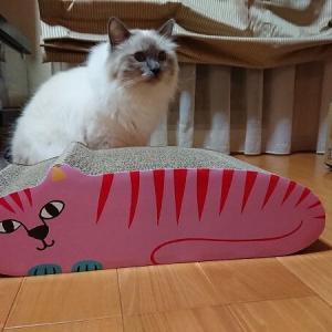 夏男、お気に入りの猫。