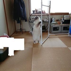 梅雨の部屋干し。