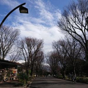 梅開花@駒沢オリンピック公園。