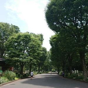 平日の駒沢オリンピック公園。