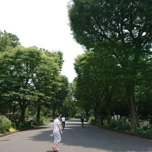 おかげ庵にカルガモ親子に@駒沢公園散歩