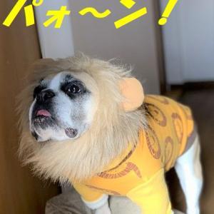 獅子ヅラで今年もやってくれそうだ!