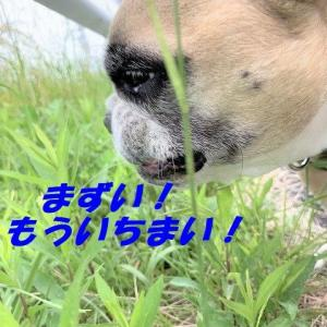 雑食系ジジイと草食系デコヨダオジさん