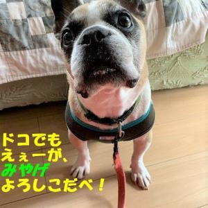 入院&全身麻酔手術@人生初!