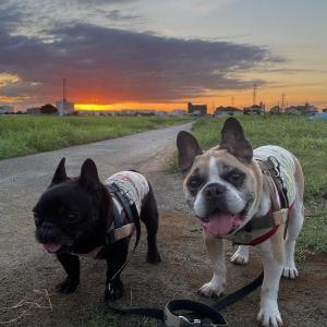 寄る年波コンビの早朝散歩!