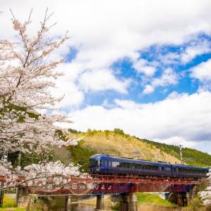 それでも、桜は咲く