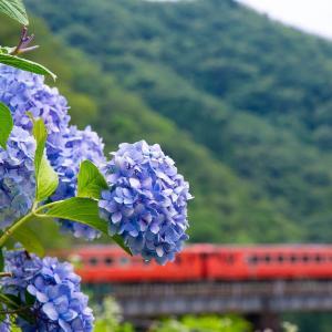 紫陽花とキハ40