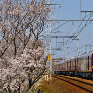 平成最後の桜と鉄道撮影記