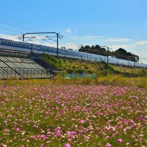 コスモスと新幹線、103系