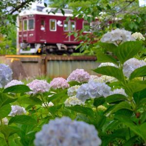 '19紫陽花と鉄道撮影記