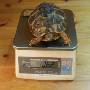 体重測定2020.3.30