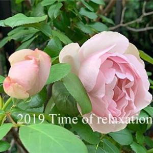 50代、父のお墓参り=庭の薔薇達♪♪=【毎日の事】
