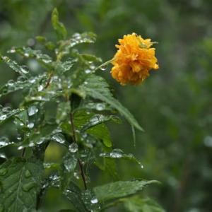 季節外れによく咲く花