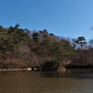今日の神戸森林植物園・・暖かでした。