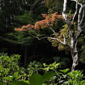 神戸森林植物園、今日の木々の様子