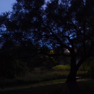 昨日(稽古、三文写真、ランチ、満月、晩御飯) 11月11日