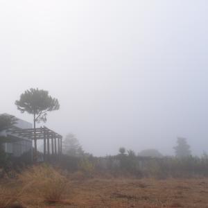 霧の朝の三匹、そして朝御飯 9月7日