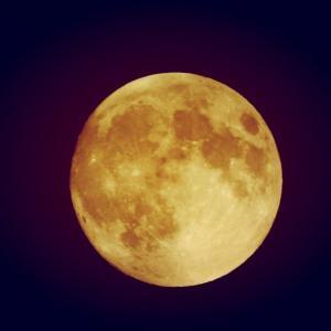 明日は「中秋の名月」