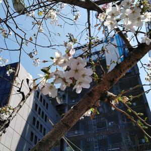 「字幕翻訳プログラム '基礎クラス'」5月開講~4/13(月)無料見学会開催!