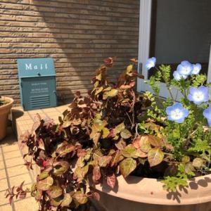 花々と共存させてもらってます...笑    筑紫野市原田 のりこキッズマム歯科医院