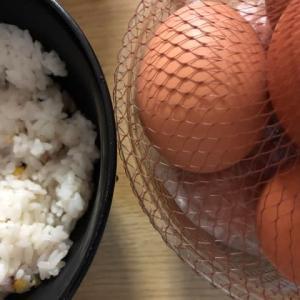 今年は「噛む食育」本格的にスタートしました   筑紫野市原田 のりこキッズマム歯科医院