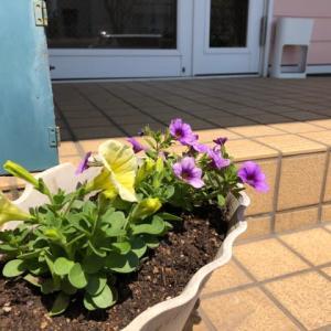 春のお花に  筑紫野市原田 のりこキッズマム歯科医院