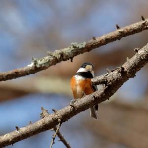 留鳥達の春
