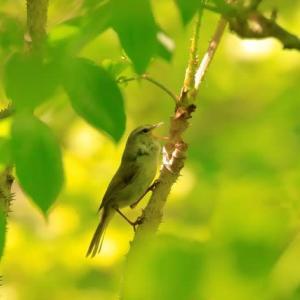 緑陰の木漏れ日