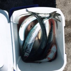 息子くんの海釣り土産