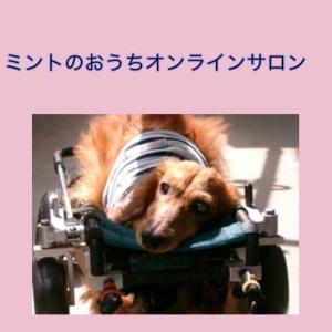 頑張り過ぎている飼い主さんへの愛犬からの贈り物