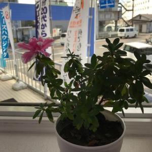 2階リビング・ダイニングがあるお家!!             季節外れの開花