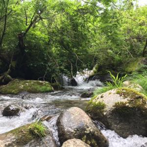 2020年6月 初夏の渓流 アマゴ 山梨県