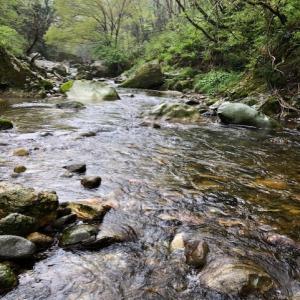 新緑の中で楽しむ渓流釣り