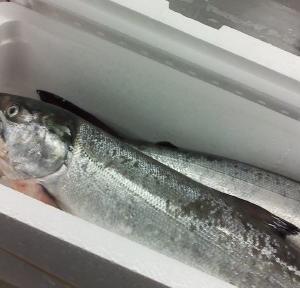 北海道産『秋鮭』