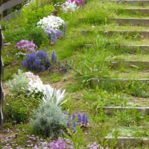 階段花壇は花盛り