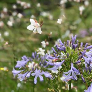 わたしと植物と花のある暮らしのテーマ