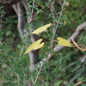 黄葉に生きた証あり日の出前