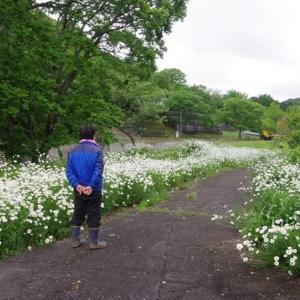 水害に負けじと町屋の花園