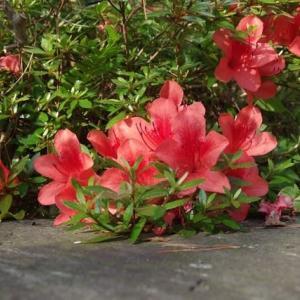 ハナから花のお話でした